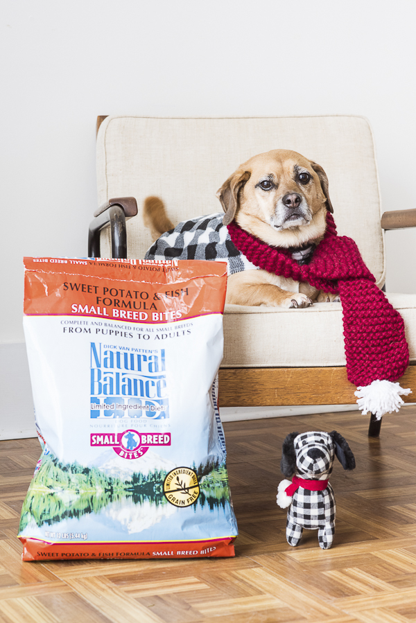 Dog wearing red scarf and plaid jacket on chair, Natural Balance Dog Food #WeBelieveInNB, pet nutrition experts