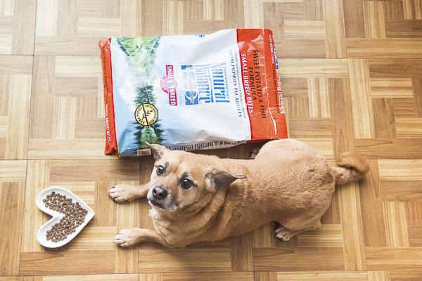 brown dog waiting to eat, Natural Balance high-quality ingredients