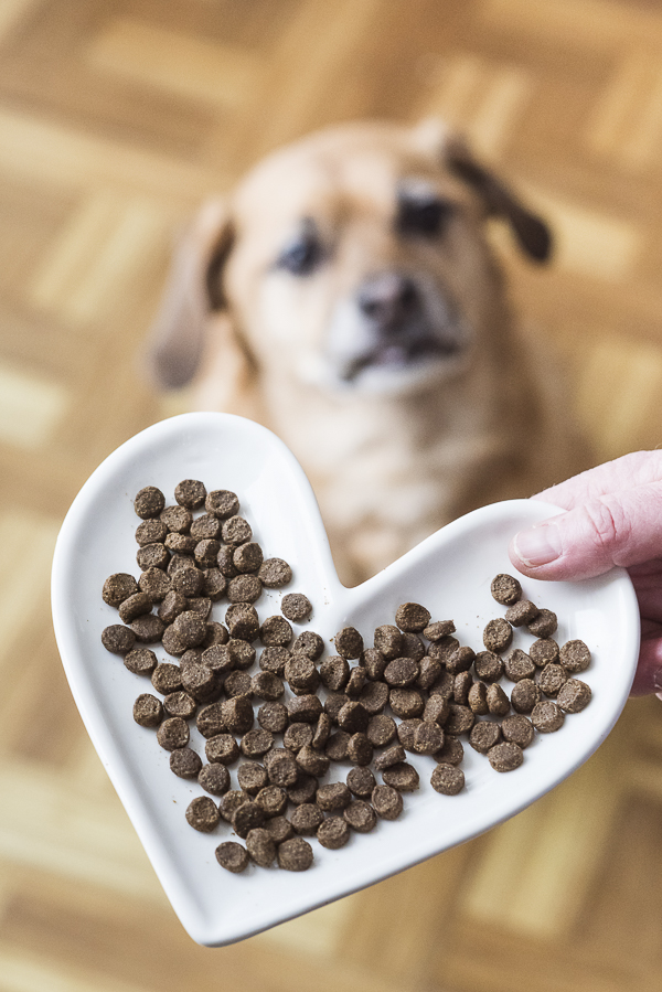 Natural Balance dog food, heart shaped plate, Puggle, #WeBelieveInNB