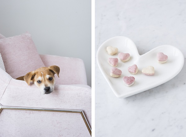 puppy on chair, white heart plate with pink and white dog treats