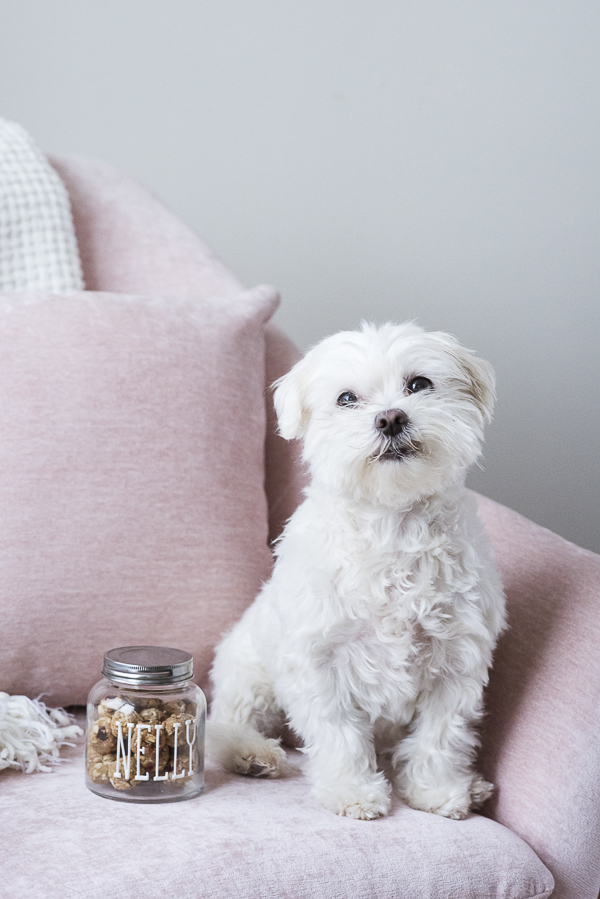 Maltese on pink chair with personalized jar of treats, puppy cut