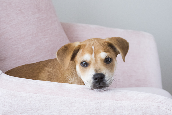 Puppy Love:  Olive the Heartmender