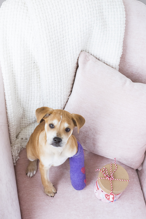 adorable brown white puppy on pink chair, purple cast with pink hearts, Valentine box