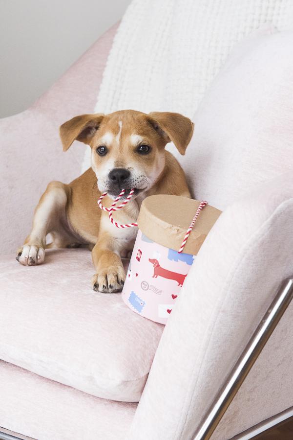 puppy opening Valentine box
