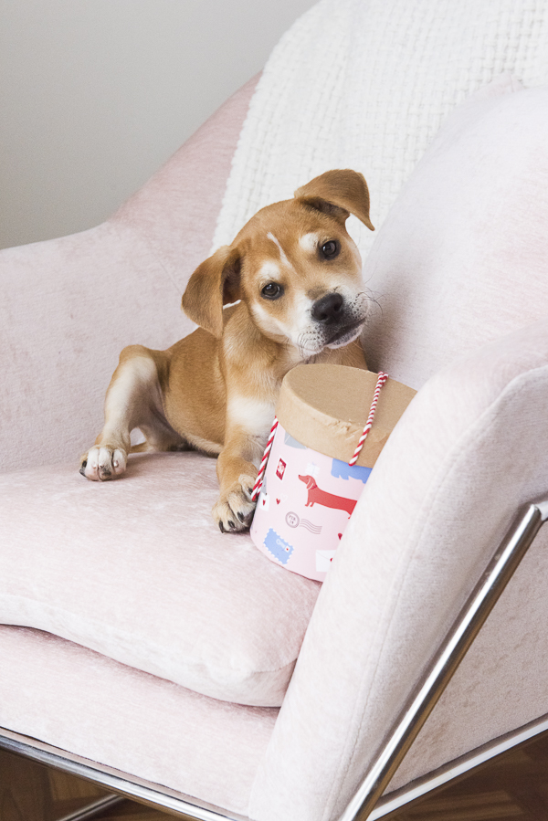 puppy on pink chair looking at Valentine box