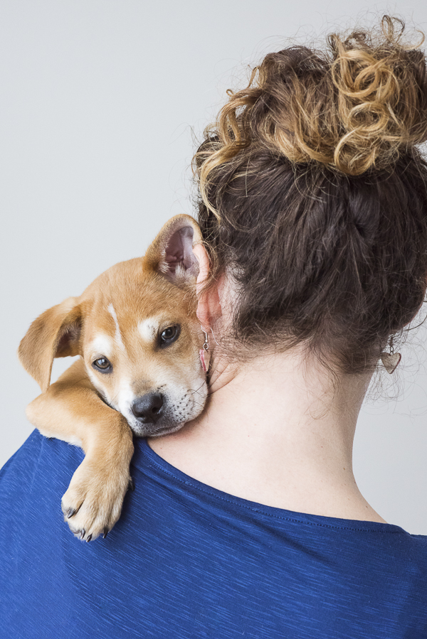 cute brown puppy snuggling with woman