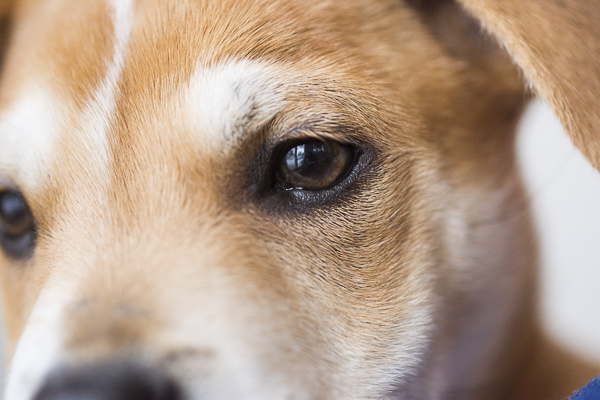 close up of puppy's eye