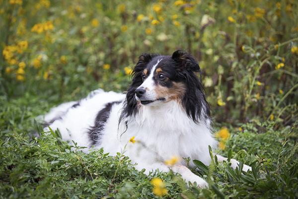 handsome dog lying on grass, joy session for dog