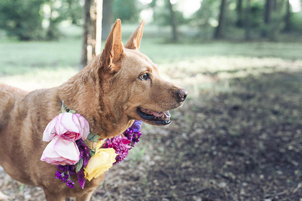brown dog wearing floral collar,