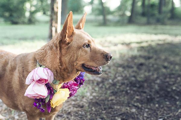 brown dog wearing floral collar,