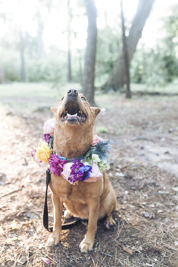 smiling dog wearing floral wreath around neck, lovely dog photos