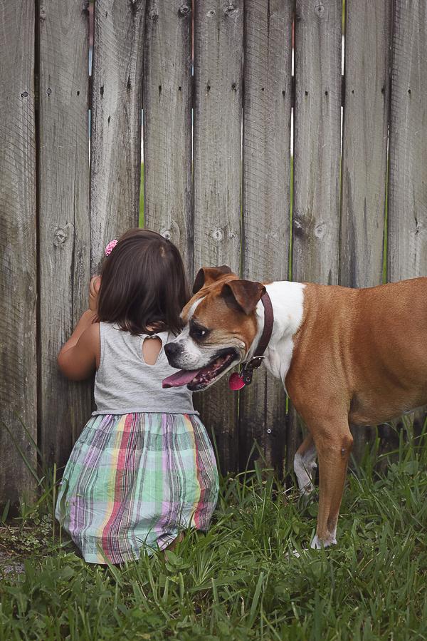 little girl looking through fence, Boxer following preschooler , girl and dog bffs