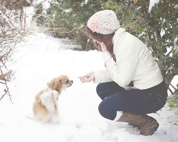 dog taking treat in snow,