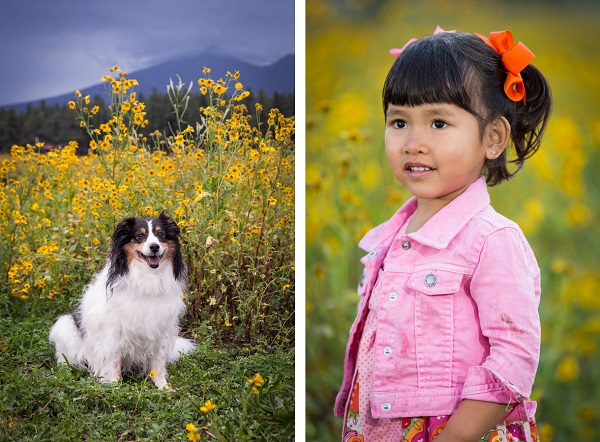 Sheltie mix, little girl in pink denim jacket, yellow flowers