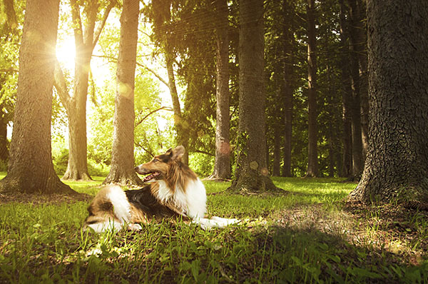 Collie mix in park, lifestyle dog photography