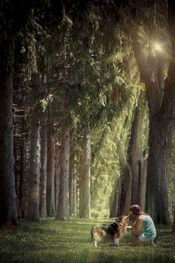 dog and woman near pine trees,sunlight streaming through trees, dog photography