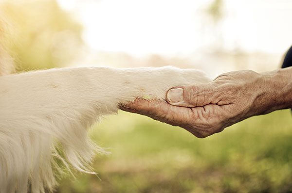 paw-hand close up, bond between dog and older person
