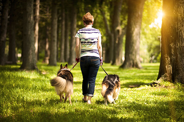 woman walking Collie mixes in park, on location dog photography