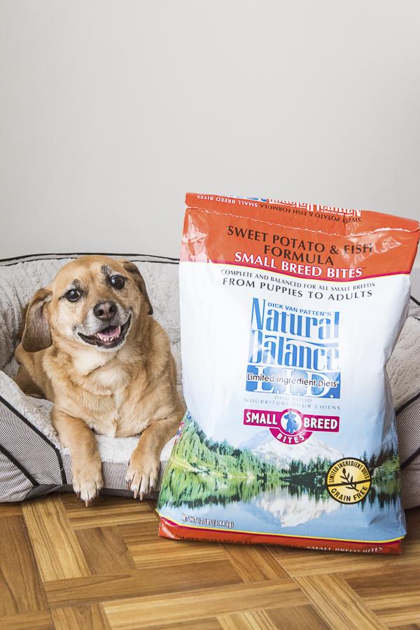 happy dog lying next to big bag Natural Balance, high-quality dog food