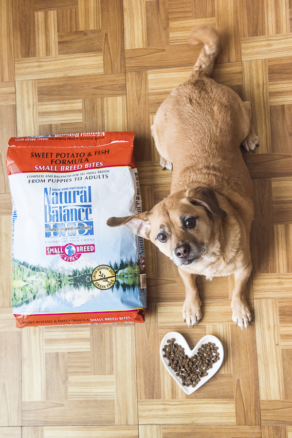 Small mixed breed dog, bag of dog food, kibble in heart shaped dish