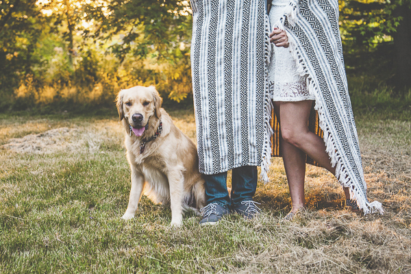 Golden Retriever during engagement photos