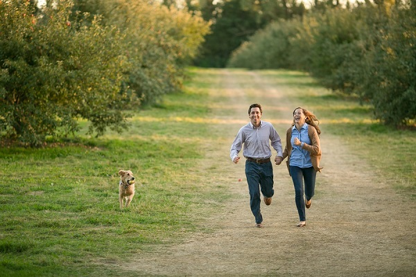 couple and Golden Lab running through apple orchard