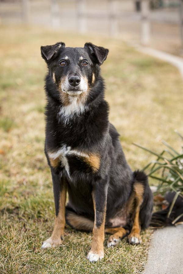 Maverick, mixed breed, medium black dog sitting on grass