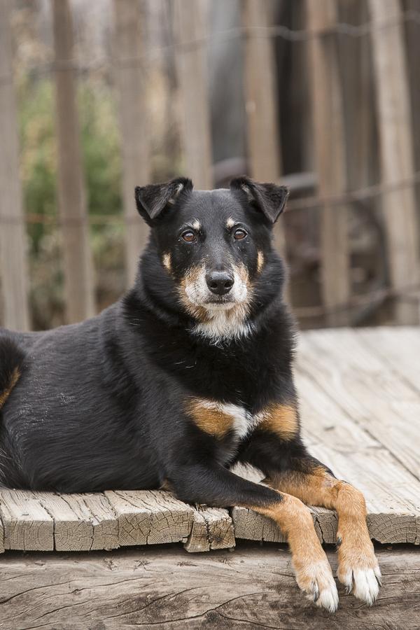 handsome dog, Maverick, resting on boardwalk with alert expression