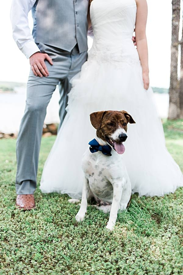 dog in bow tie, bride, groom in background, include dog in wedding portraits