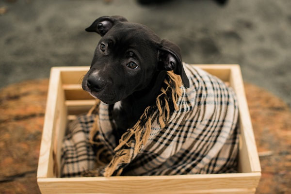 cute mixed breed puppy wrapped in blanket sitting wood box