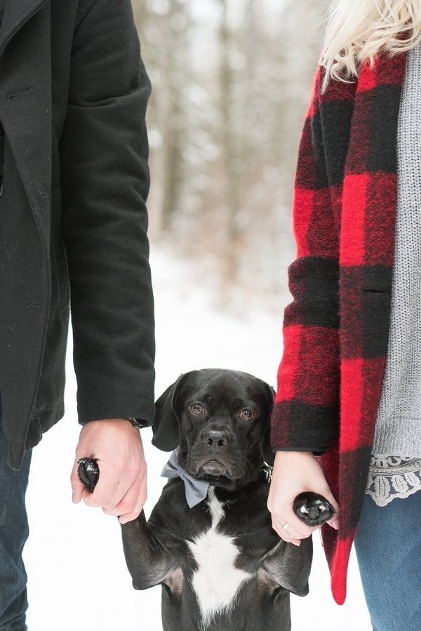 black Puggle standing on hind legs, people holding his paws