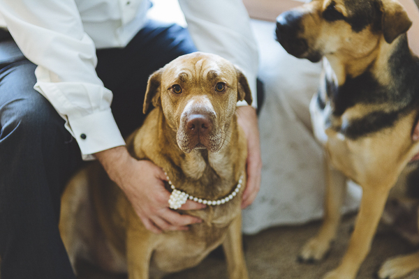 cute dog wearing pearls, first look before wedding