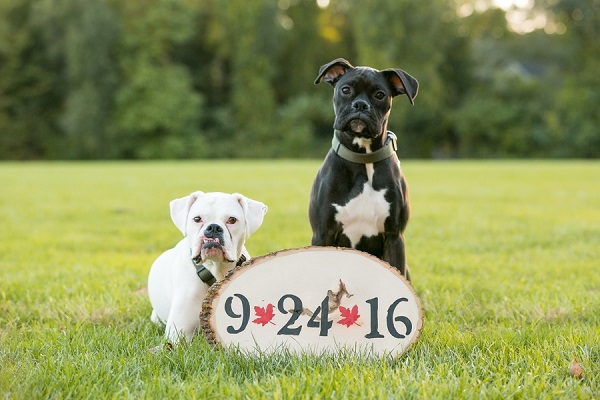 white Boxer, black Boxer Save the Date sign