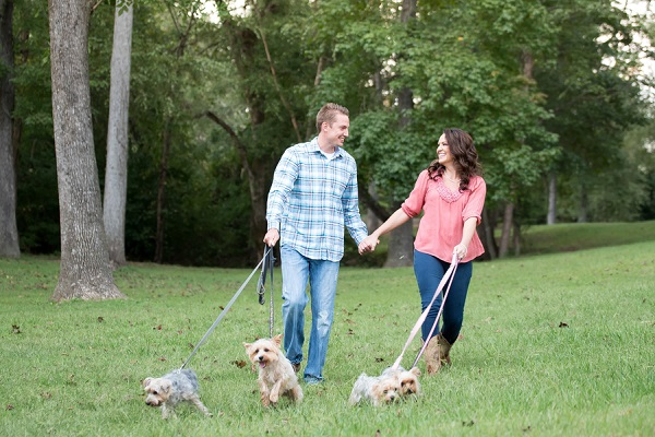 couple holding hands walking 4 small dogs, Yorkshire Terriers