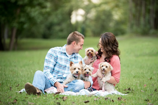 couple and 4 Yorkshire terriers sitting on blanket