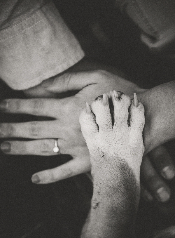 dog's paw, woman's hand, man's hand, engagement ring shot with dog