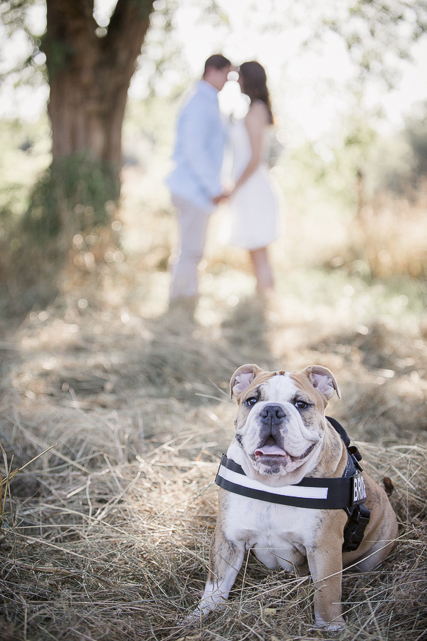 English Bulldog puppy and couple in background