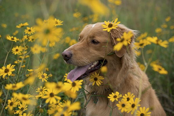 dog in field of flowers