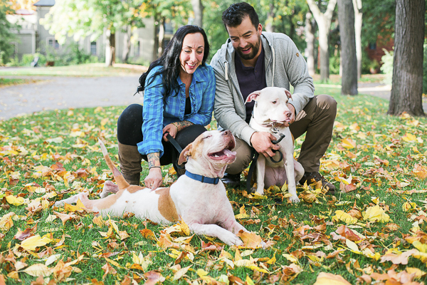 Pitties in engagement photos, pit bull lying on stomach