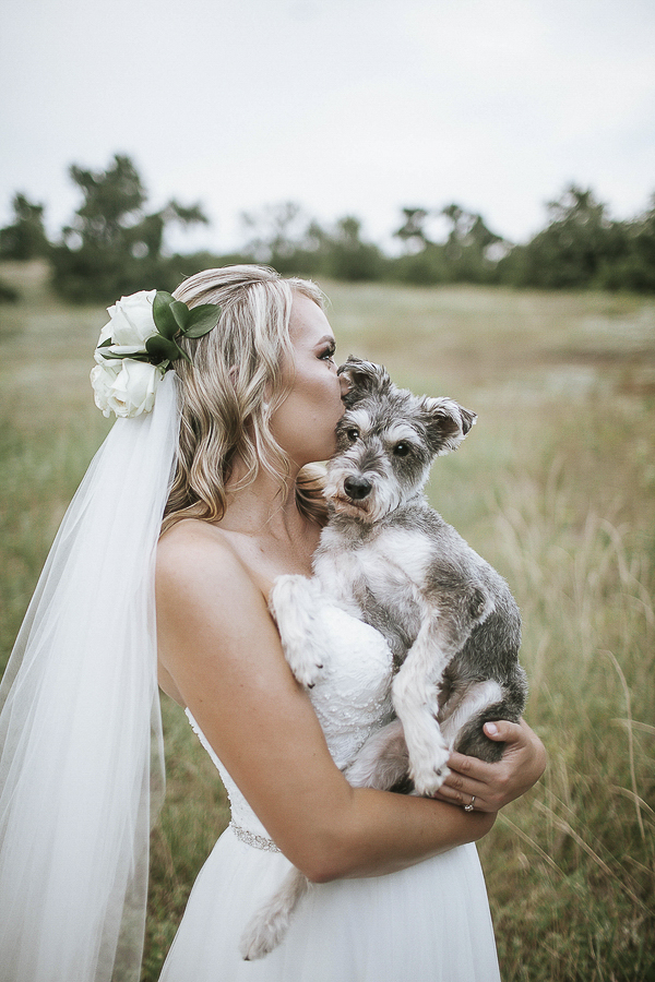 Bride kissing rescue dog in field, blind Schnauzer mix