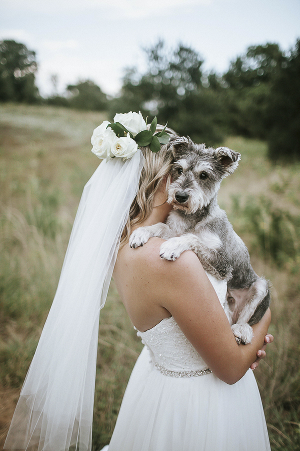 blind Schnauzer mix and bride