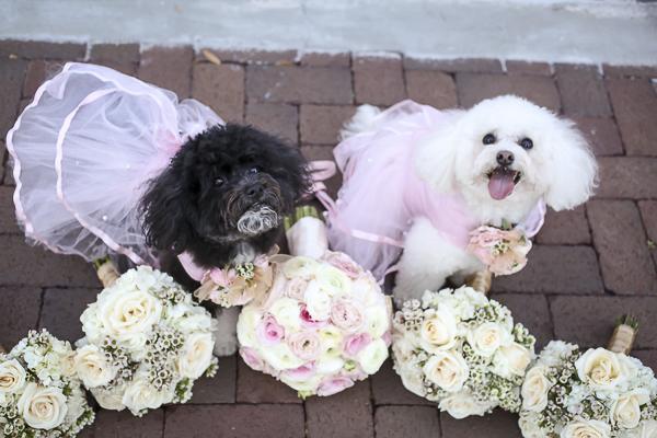 poodles wearing pink dresses, bridal bouquets