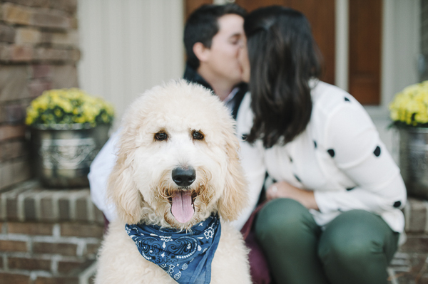 Happy Tails: Tag the Golden Doodle