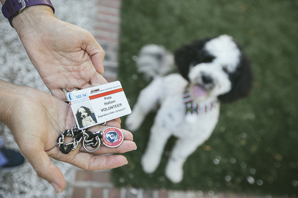 Therapy Dog Identification, Portuguese Water Dog