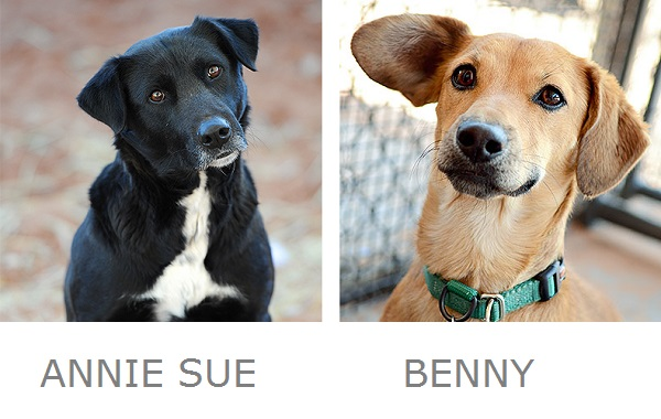 Adoptable Lab mix, adoptable doxie Best Friends Animal Society