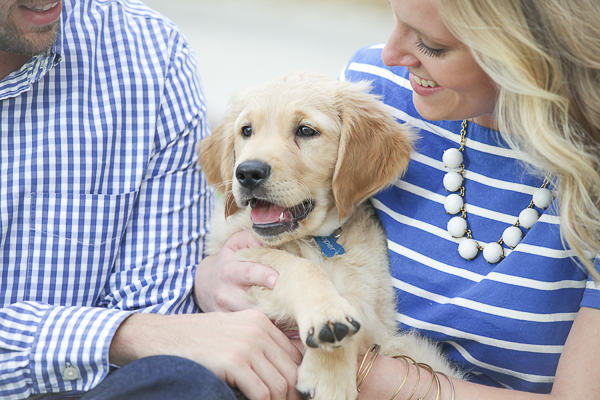 Puppy Love: Cooper the Golden Retriever
