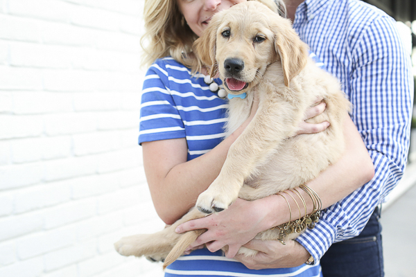 woman wearing striped blue white dress holding cute Golden Retriever puppy Michelle Stoker Photography