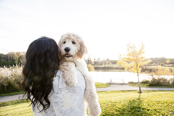 brunette holding goldendoodle puppy, park setting dog photos
