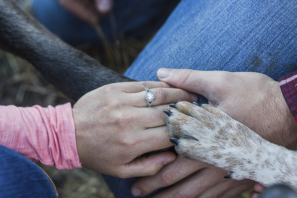 hands and paws, engagement photos with dogs