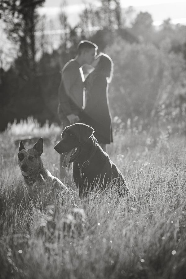 black white engagement pictures with dog, rural dog portraits